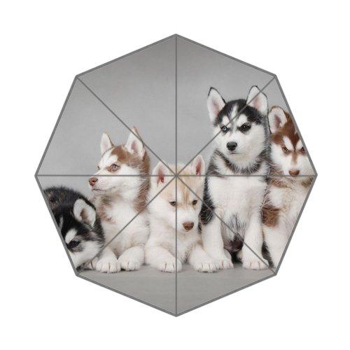 Parapluie pliable pour chien Husky Sibérien parapluie pour chien