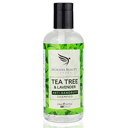 Shampooing antipelliculaire à l'huile d'arbre à thé (fabriqué au Royaume-Uni) | Tue les bactéries du cuir chevelu et les cheveux qui démangent | Prévient la formation de pellicules chez les hommes et les femmes | 250ml